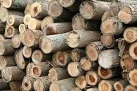 Wood Logs/Shores/Post For Sale Starting At $500JMD