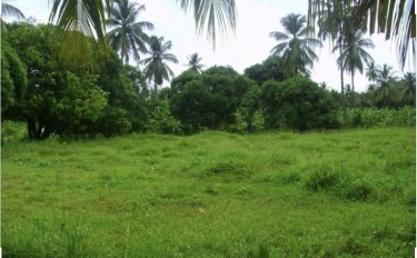 8 Acres Of Land