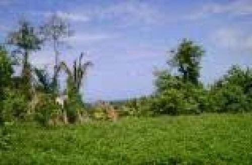 35 Acres Development Land (Residential)