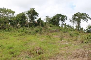 Limited Free Discount On 1 Acre Prime Land, Mandev Land Cedar Grove Estates