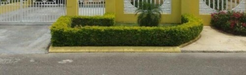 Landscaping/Gardening With Own Tool Seeks Work. Other Market Kingston & St Andrew