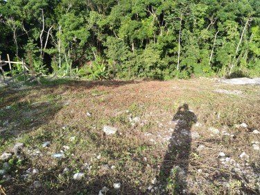 1/4 ACRE OF LAND +