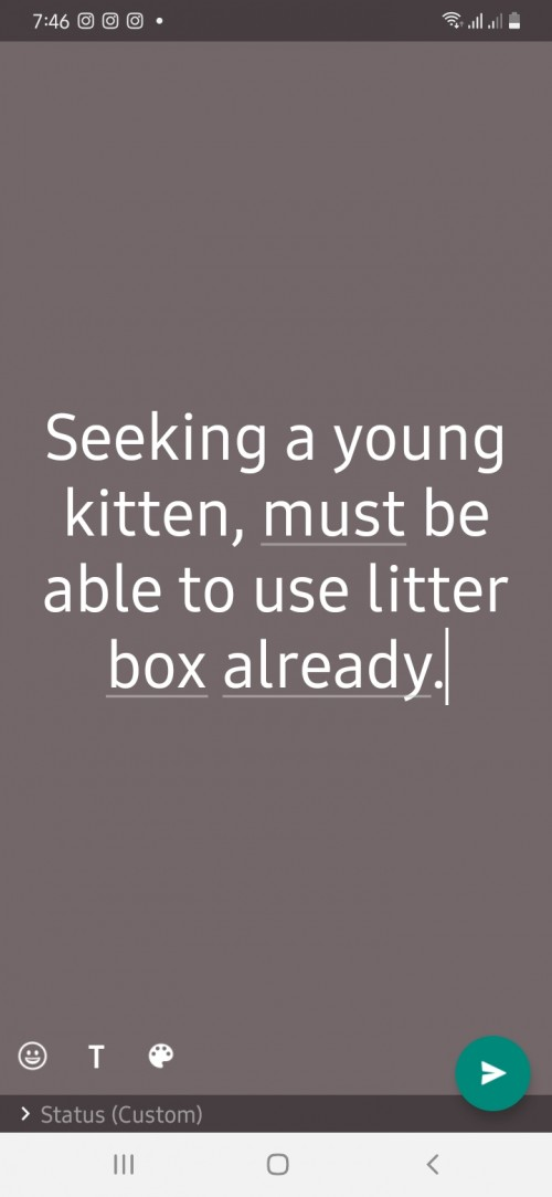 Seeking A Young Cat
